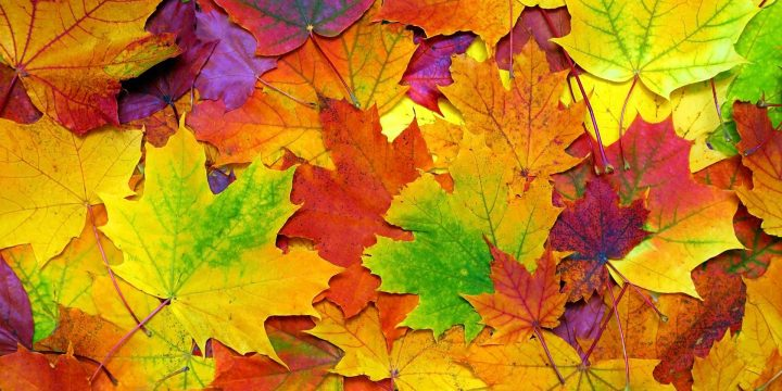 Common Injury Risks in the Fall